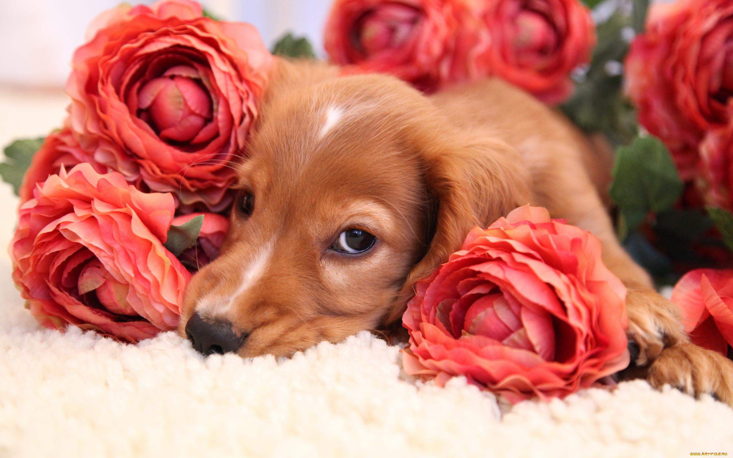 щенок и цветы картинки тем